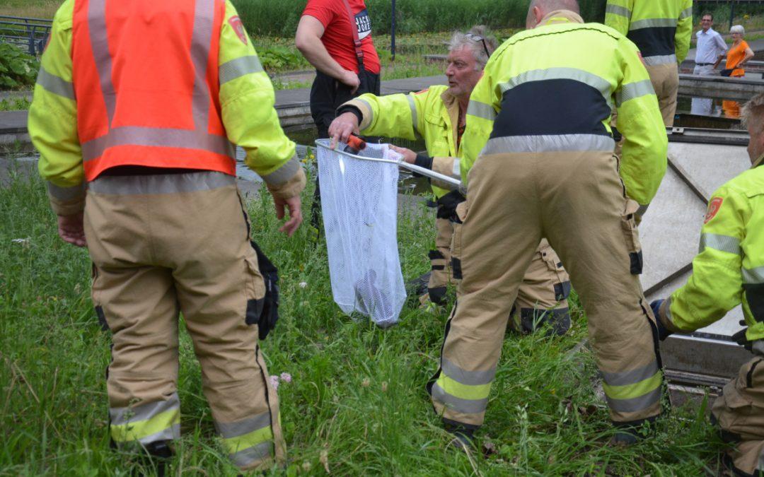 Brandweer redt eenden uit put